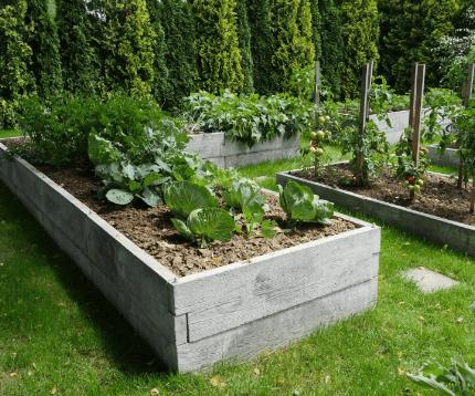 Warzywniki
